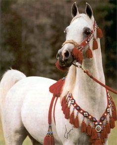 Arabian Horse Galleries Opening Ceremonies June 12th at Kentucky Horse Park - 8-Apr-10: Arts & Culture article