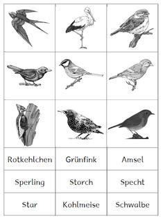 die ersten und zweiten klassen sollten zug- und standvögel