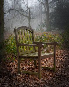 Woodland Throne