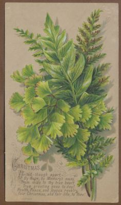 victorian fern cards - Google Search