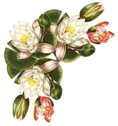 Violeta lilás Vintage: Flores Vintage
