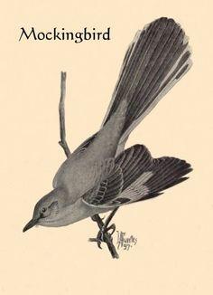 mockingbird tattoo | Found on wildlifeofnorthamerica.info