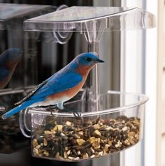 Observer Window Feeder.  Birds that use this feeder: Blackbirds, Bluebirds, Cardinals, Chickadees, Doves, Finches, Flickers, Goldfinches, Grackles, Grosbeaks, Jays, Juncos, Kinglets, Mockingbirds, Nuthatches, Redpolls, Siskins, Sparrows, Starlings, Titmice, Towhees, Woodpeckers and Wrens #windowbirdfeeder #birdfeeder