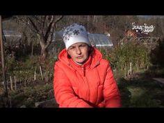 Какой лук лучше сажать под зиму? Когда сажать лук под зиму? | Красивый Дом и Сад