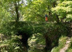 Small arch bridge by Koji Kishita on Arch Bridge, Country Roads, Japan, Explore, Plants, Photography, Photograph, Fotografie, Photoshoot