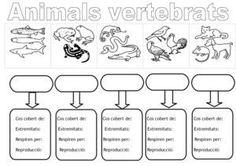 Animals Vertebrats Esquema Per Omplir