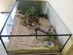Kelomang Ceria: Green and natural Crabitat / Aquarium hijau alami buat Kelomang