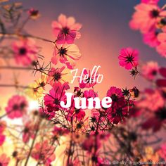 Hello June #june hello june flowers sunset
