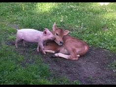 Unusual friends are the greatest by The Happy Herd Farm Sanctuary7