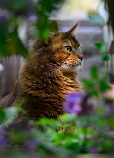 This cat waits in the garden...there may be a mouse involved.