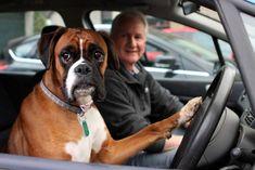 Chateada por ter sido deixada dentro do carro, cadela aperta a buzina por 15 minutos | Razões para Acreditar