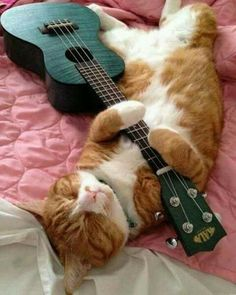 Kala Ukulele - Always Wanted To Learn Guitar? Funny Cats, Funny Animals, Cute Animals, Animals Images, Crazy Cat Lady, Crazy Cats, I Love Cats, Cool Cats, Arte Do Ukulele