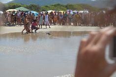 Tartaruga retornando ao mar - Barra da Lagoa (Projeto Tamar)