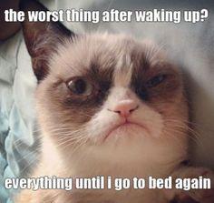 grumpy cat meme | Grumpy cat meme part2 5 Le grumpy cat dans une pub pour Friskies