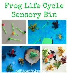 The Frog Life Cycle Sensory Play with Water Beads- they make perfect frog eggs