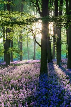 a carpet of bluebells//good idea for scenery for a story I am writing Beautiful World, Beautiful Places, Beautiful Pictures, Beautiful Forest, Simply Beautiful, Foto Picture, Parcs, Belle Photo, Mother Earth