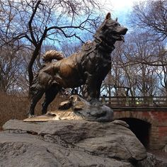 balto - Google Search