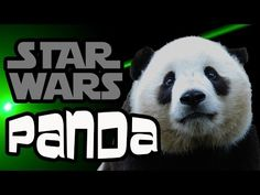 Star Wars Panda (guerra laser panda) Kung Fu Panda, Panda Bebe, Star Wars, Bear, Animals, Funny Things, Pandas, Funny, Animales