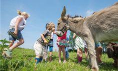 #FarmCamps De Kamperhoek - #donkey #love #fun #kids #holland #farm #glamping. Hay Hay! Book your #farmstay #holiday in a FarmCamps #safaritent on farmcamps.nl.