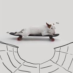 Skate Choo