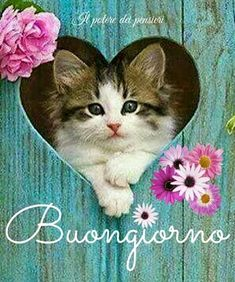 Buongiorno Italian Greetings, Italian Memes, Good Morning, Good Night, Good Day Quotes, Be Nice, Qoutes Of Life, Good Day, Bonjour