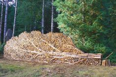 This artist embraced irony by stacking their firewood to resemble a fallen tree.