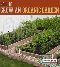 Grow Your Own Organic Garden Even in Small Spaces