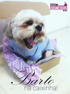 Bartô na caixinha