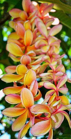 Collier de fleurs pour cérémonie