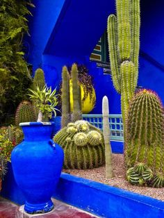 The Majorelle Garden (Arabic: ) is a twelve-acre botanical garden and artists landscape garden in Marrakech, Morocco. It was designed by the expatriate French artist Jacques Majorelle in the and during the colonial period when Morocco was a pr Mexican Garden, Mexican Patio, Moroccan Garden, Mexican Hacienda, Mexican Style, Cactus Y Suculentas, Cactus Flower, Cactus Cactus, Indoor Cactus