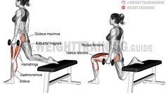 Dumbbell one-leg split squat exercise