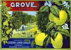 Citrus Label Collection / Grove Brand.jpg