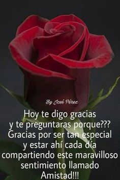 quotes in spanish quotes in spanish Happy Birthday Wishes Cards, Happy Wishes, Good Night Wishes, Good Night Quotes, Morning Greetings Quotes, Morning Messages, Travel With Friends Quotes, Famous Quotes From Songs, Anniversary Quotes For Him