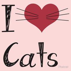 I <3 Cats!(ᵔᴥᵔ)