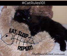 Cat memes, videos and tips for your furry buddy. Photography, streaming memes and gifs wrapped up with fun and educational videos based on cat life. Old Cats, Cats And Kittens, Long Haired Cats, Cat Towers, Nocturnal Animals, Owning A Cat, Maine Coon Cats, Gentle Giant, Cat Memes