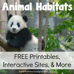 Animal Habitats: Free Printables, Interactive Sites, and More! 1st Grade Science, Primary Science, Kindergarten Science, Teaching Science, Elementary Science, Teaching Ideas, Science Curriculum, Teacher Resources, Science Lessons