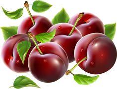 "Photo from album ""Ягоды"" on Yandex. Fruit Illustration, Food Illustrations, Food Clipart, Image Clipart, Garden Labels, Fruit Picture, Fruits Images, Watercolor Fruit, Fruit Art"
