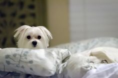Sleep with your pup? Here are 9 tips for sleeping soundly with a pet in your bed.