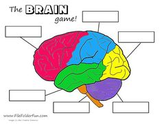 Human Brain Craft & Activities I'd like to make a big puzzle poster like this! Brain Craft, Brain Science, Brain Gym, Science Biology, Teaching Science, Human Body Activities, Brain Activities, Physical Activities, Elderly Activities
