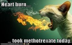 Sunday- methothrexate day  Monday- feel nauseated, miserable , dizzy and have migraines the whole day!
