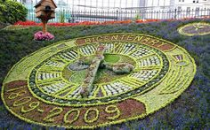 Linnaeus's floral clock even had a plant to tell him when it was 3am. Ken   Thompson will not be getting up to check if it is accurate, but he does   enjoy the punctuality of evening primroses.