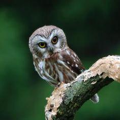 Woo doesn't like owls