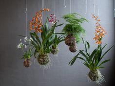 Vivere in un piccolo appartamento non vuol dire necessariamente dover rinunciare a piante e giardinaggio; ci sono dozzine di modi per aggiungere del verde e così illuminare il vostro spazio. Il Ko...