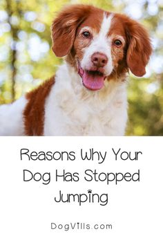 Have you noticed that your dog has stopped jumping on you when you come home or is reluctant to hop up on the bed?    Then you might be wondering what's going on and if your dog is ill.    Fortunately, I've got you covered with 8 reasons why your dog might be scared to jump up or down. Dog Love, Puppy Love, All About Puppies, When You Come Home, Dog Health Tips, Bad Memories, Puppy Chow, Dog Behavior, Dog Training Tips