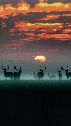 Sunrise over Phoenix park, Dublin
