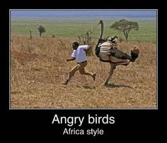 Africa is amazing and funny place. Be careful while you travel in Africa, you may be faced to real angry birds. Check out the funny image of Africa style . Angry Birds, Funny Animal Quotes, Funny Animals, Animal Funnies, Funny Cartoons, Funny Jokes, Hilarious, Funniest Jokes, It's Funny