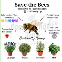 Do you have bee friendly flowers at your home, EcoSquirrels? I have thyme and mint. If you see a bee, remember that it doesn't want to hurt… Getting Rid Of Bees, Honey Bee Facts, Bee Friendly Flowers, Plan Bee, National Geographic Animals, Bee Activities, Global Warming Climate Change, Types Of Bees, Bee Hive Plans