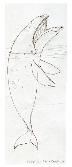 sketches of whale  www.felixdoolittle.com