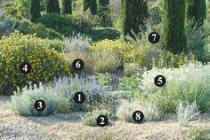 1. Salvia chamaedryoides  (40-60 cm / 60 cm) 2. Rhodanthemum hosmariense  (20-30 cm  /  40-50 cm) 3. Artemisia abrotanum 'Silver'  (40-60 cm / 60 cm) 4. Phlomis 'Le Sud'  (1,25 m / 1,25-1,50 m) 5. Senecio vira-vira  (60 cm / 60-80 cm) 6. Salvia fruticosa  (60 cm / 60-80 cm) 7. Salvia leucophylla  (1,5-2 m / 1-1,5 m) 8. Artemisia lanata  (15 cm / 30-40 cm)