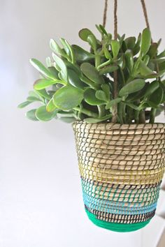 Plantas colgantes en pinterest string garden jardineras for Plantas suculentas colgantes